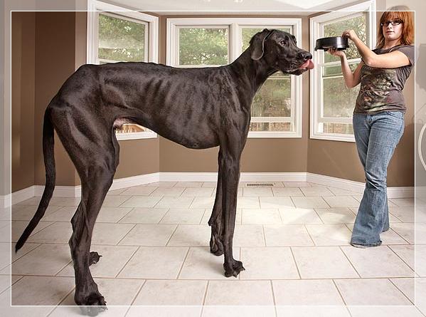 世界まるみえ 大きい犬 画像